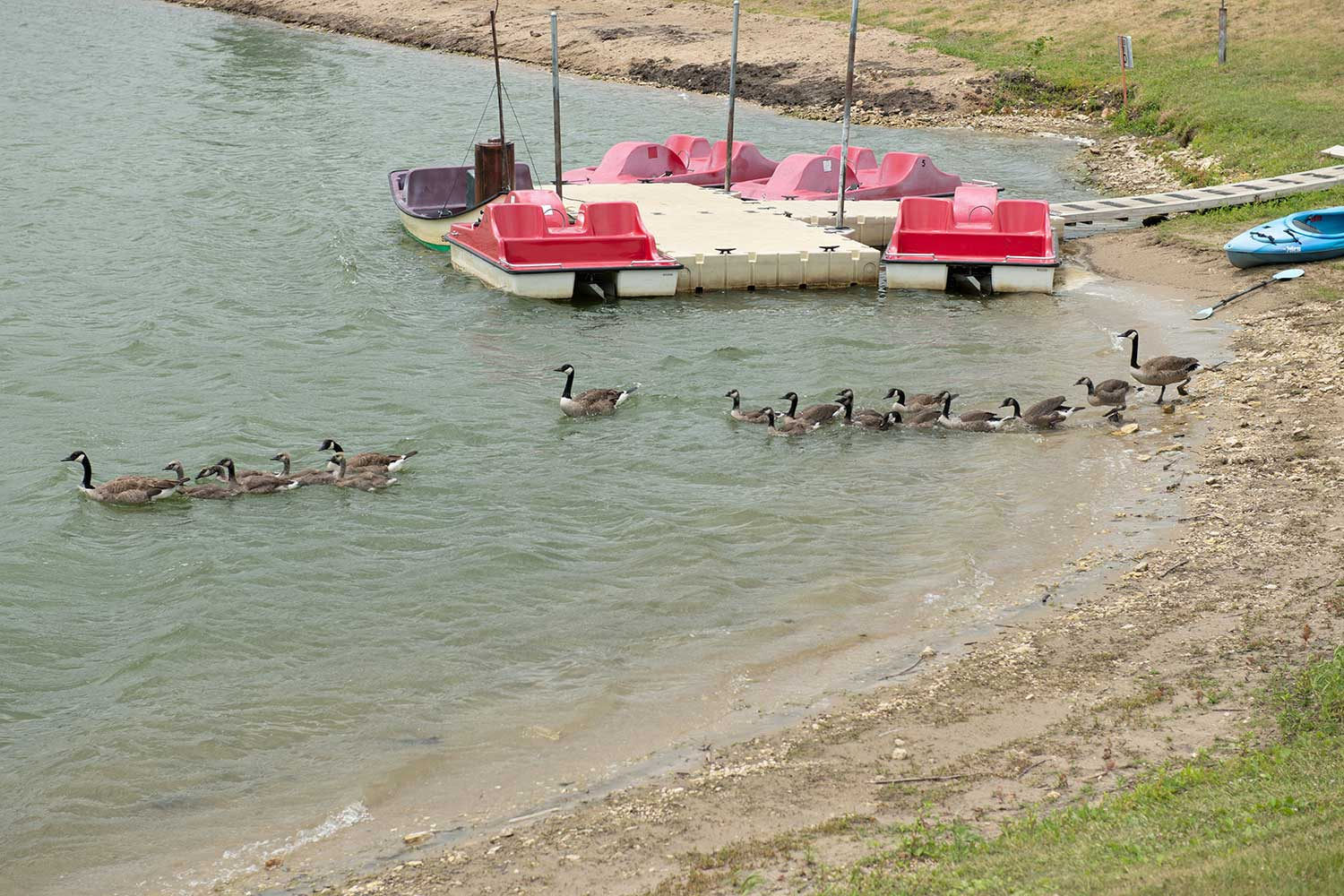 pedal boats, attractions